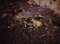 restos del Muerto