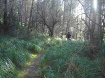 Bosque de Son Boal