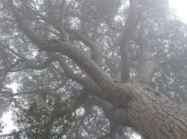 en la niebla mañanera