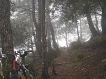 niebla persistente
