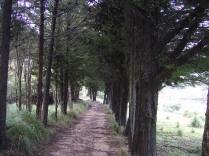 entrada Sa Coma de´n Vidal
