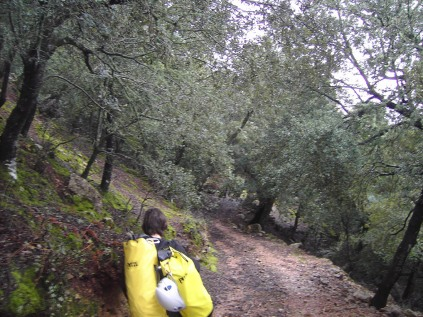 descenso boscoso