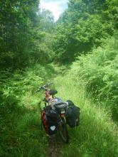 bosque hacia Cudillero