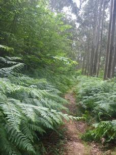 Sólo en la selva