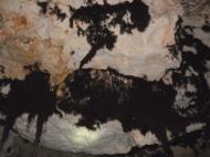 raíces del techo
