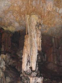 muchas raíces pueblan las columnas