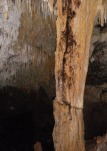 raíces en columna fracturada