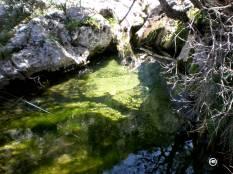 El encanto de la Naturaleza