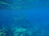 vida subacuática