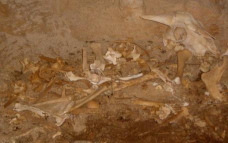 muchos restos óseos