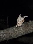 Cráneo avisando del peligro nocturno