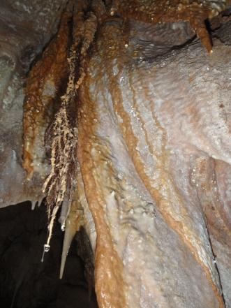 raíces cubiertas de carbonato cálcico
