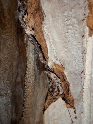 raíz destrozando parte de la colada