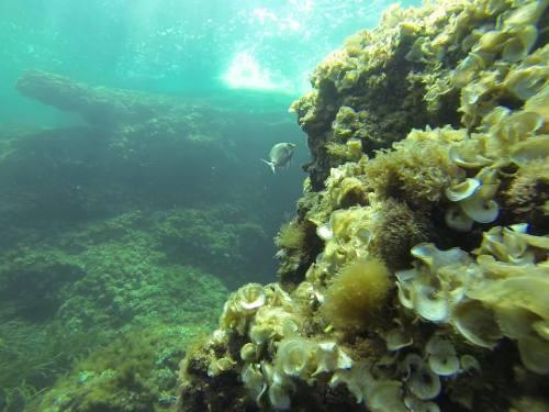 Inmersión en ses Penyes Rotges,  -30m
