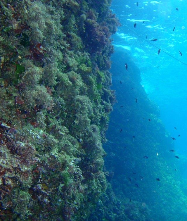 subacuática. Cova des Fonoll Marí