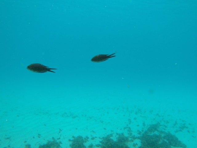 Tempestad bajo el mar