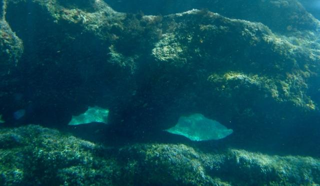 buceo Dique Oeste