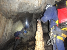 Covota des Puig Gros de Bendinat