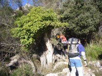 Torrent des Barrancons