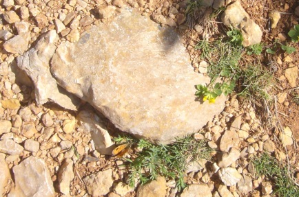 mariposa posada próxima a nuestros pies