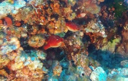 Buceo Camp de Mar. Foto: Rafael MInguillón BTTersMallorca