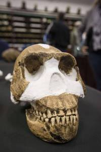 Un cráneo de 'Homo naledi' encontrado cerca de Johannesburgo