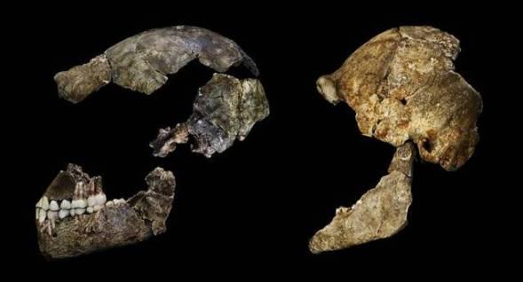 cráneo Homo Naledi