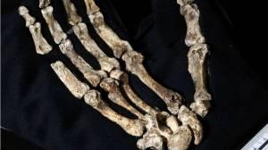 Mano de un 'Homo naledi' capaz de manejar instrumentos y adaptada a la vida arbórea