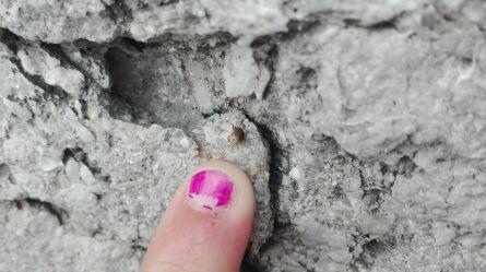 GeoloDía 2016 BTTersMallorca Foto: Rafael MInguillón